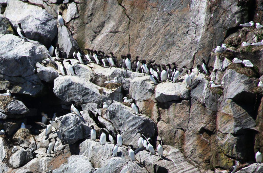 Birds along a cliff.